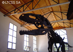 The Gigantosaurus at the Municipal Museum