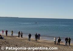 Night of whales at El Doradillo