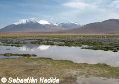 Lake of the andean plateau