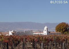 Wineyards and wineries in Cafayate - Salta