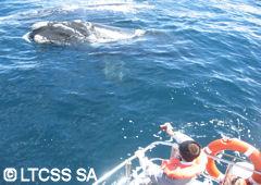 Avistamiento de una ballena