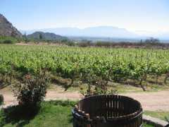 Bodega Finca Las Nubes - Cafayate - Salta