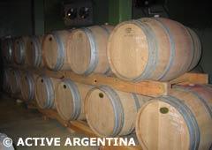 Los vinos de Salta
