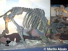 <!--:es-->Tour Paleontológico<!--:--><!--:en-->Paleontological Tour<!--:-->