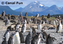 <!--:es-->Pingüinera y Estancia Harberton<!--:--><!--:en-->Penguins´ rookery and Estancia Harberton<!--:-->