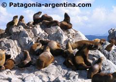 Isla Lobos - Ushuaia