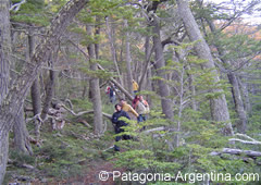 Trekking in Tierra del Fuego N.P. paths