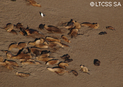 A group of sea lions