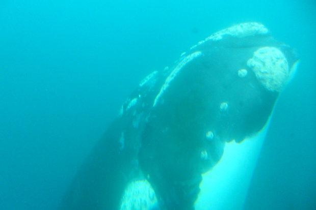 Península de Valdés, paraíso de ballenas