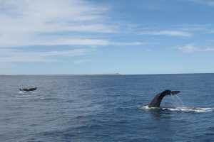 Pen�nsula de Vald�s, para�so de ballenas