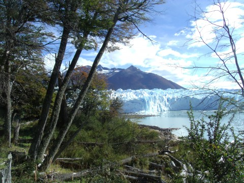 Glaciar Perito Moreno desde el Sendero del Perito Moreno Glacier from the forest path - National Park Los Glaciares