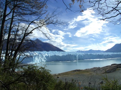 View of the south wall of the glacier Perito Moreno from the forest path