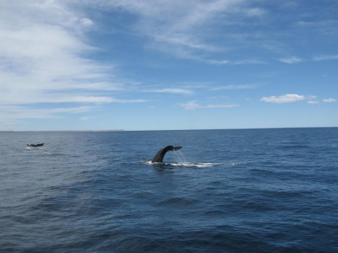 whale watching navigation - Puerto Madryn - Patagonia Argentina