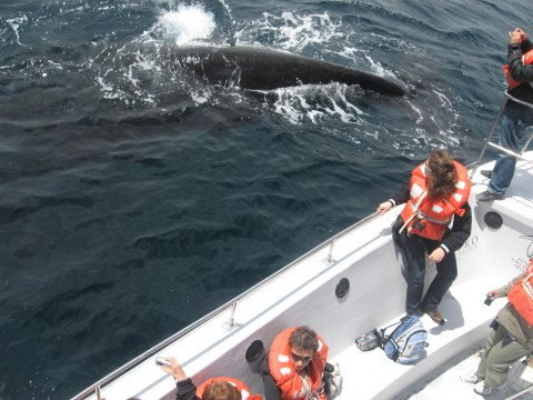 whale watching navigation - Puerto Madryn