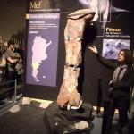Fémur del Dinosaurio más grande del mundo en el MEF