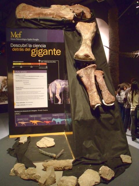Huesos del Dino más grande del mundo en el MEF