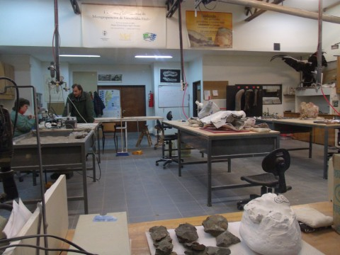 The fossils laboratory of MEF - Trelew