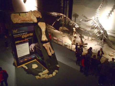 Muestra permanente del Museo Elgidio Feruglio