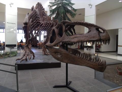 Dinos at Egidio Feruglio Museum - Trelew - Patagonia Argentina