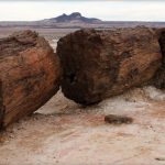Petrified Forest Natural Monument