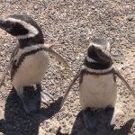 Conociendo a los pingüinos